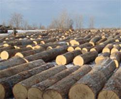 Hardwood Log